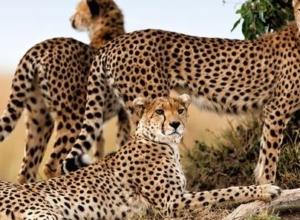 Last Minute: 9 dni z all inclusive w 4* hotelu w Kenii za 2199 PLN!