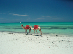 Tunezja (wyspa Dżerba), 4* hotel z all inclusive za 824 zł